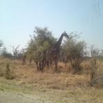 Hwange – Zimbabwe